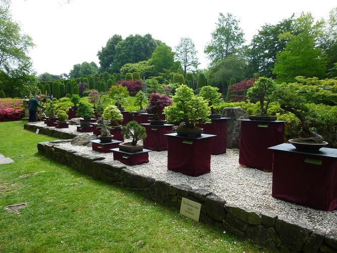Japanischer Garten Bonn | Bonsai Arbeitskreis Hückelhoven e.V.